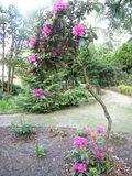 Ogród Botaniczny - Zagwiździe.jpeg