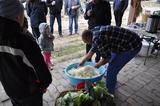 Galeria Na świętej Tekli będziemy ziemniaki piekli i kapustę siekli